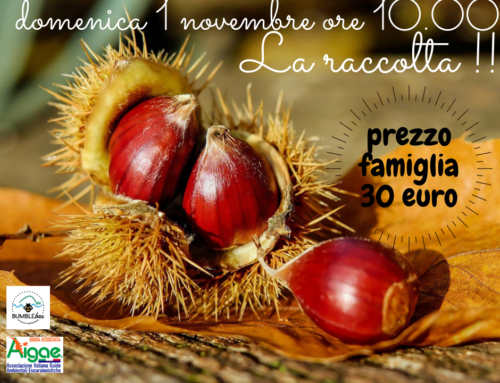 La raccolta delle castagne Domenica 1 novembre